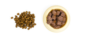 Dog food and cats isolated. Studio Photo